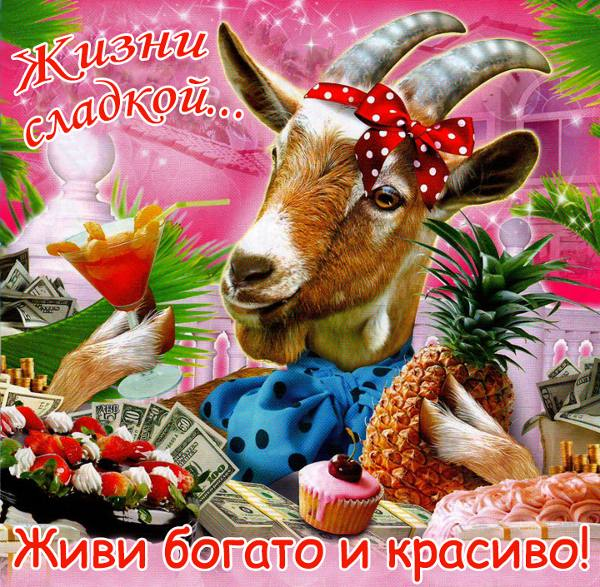 Шуточные поздравления с козой